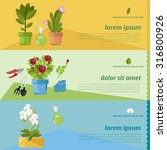 gardening and growing... | Shutterstock .eps vector #316800926