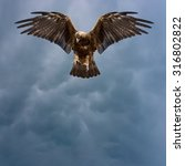 eagle with spread wings in the...   Shutterstock . vector #316802822