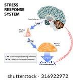 stress response system.   Shutterstock . vector #316922972