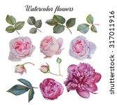 flowers set of hand drawn... | Shutterstock . vector #317011916