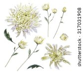 set of vintage watercolor... | Shutterstock . vector #317031908