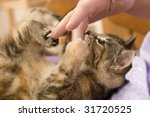 Stock photo tabby kitten at play 31720525