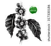 hand drawn coffee tree branch... | Shutterstock .eps vector #317330186