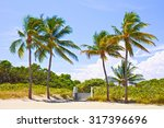 palm trees and pathway to the...   Shutterstock . vector #317396696