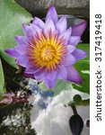 a beautiful waterlily or lotus... | Shutterstock . vector #317419418