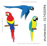 parrot macaw cartoon vector... | Shutterstock .eps vector #317420396