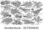 herbs  anice basil  chervil ... | Shutterstock .eps vector #317444642