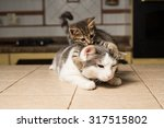 Stock photo small kitten plays with big cat 317515802
