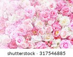 Stock photo pink rose flower background 317546885