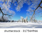 Winter Landscape Frost Oaks In...