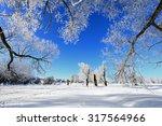 Winter Landscape Frost Oaks In...