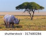 safari | Shutterstock . vector #317680286