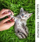 Stock photo hand playing with a little kitten on the green grass 317705975