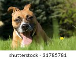 funny dog in the grass | Shutterstock . vector #31785781