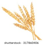 wheat ears isolated on white... | Shutterstock . vector #317860406