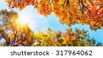 the warm autumn sun shining... | Shutterstock . vector #317964062