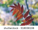 fall leaves   minnehaha falls ...   Shutterstock . vector #318038108