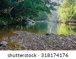 Small Nature Jungle River In...