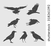 Set Of Silhouettes Of Crows