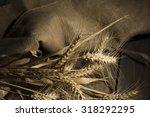 ripe ears of wheat on the... | Shutterstock . vector #318292295