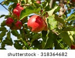 red apples on the trees in the... | Shutterstock . vector #318364682