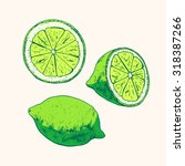 isolated illustration of lime.... | Shutterstock .eps vector #318387266
