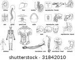 anatomy | Shutterstock .eps vector #31842010