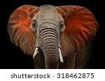 Beautiful African Elephants In...
