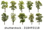 Stock photo collection of great tree isolated on white background 318493118