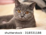 Stock photo cute kitten playing on the bed 318531188