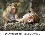 monkey family in thailand. | Shutterstock . vector #318709412