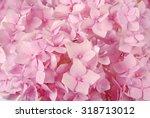Beautiful Pink Hydrangeas...