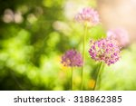beautiful violet flowers at...