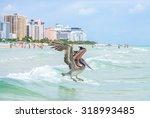 A Brown Pelican Flies Low Over...