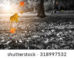 autumn park in black and white...   Shutterstock . vector #318997532