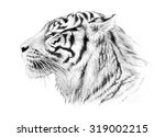 A Majestic Tiger Illustration...