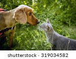 Stock photo golden cocker and the smoked color cat nose to nose 319034582