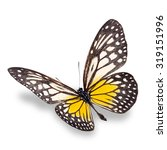 beautiful yellow butterfly... | Shutterstock . vector #319151996