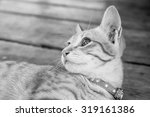 Stock photo a black and white kitten image 319161386