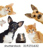 collection pets | Shutterstock . vector #319251632