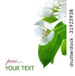pear blossom border | Shutterstock . vector #31925938