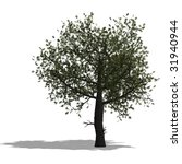 rendering of a tree with shadow ... | Shutterstock . vector #31940944