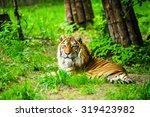 tiger | Shutterstock . vector #319423982