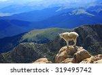 mountain goat standing on top...   Shutterstock . vector #319495742