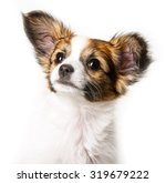 cute papillon puppy isolated... | Shutterstock . vector #319679222