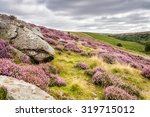 Goathland Moor Heather And...