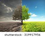 one tree in field | Shutterstock . vector #319917956