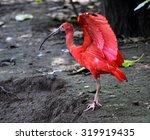 scarlet ibis | Shutterstock . vector #319919435