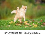 Stock photo funny red cat playing outdoors in autumn 319985312