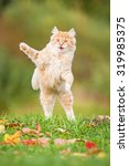 Stock photo little funny cat playing outdoors in autumn 319985375